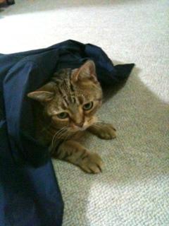 Shirtに隠れるのは楽しい!